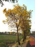 Flores amarillas en las calles de Tailandia Imágenes de archivo libres de regalías