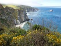 Flores amarillas en los acantilados del mar Fotos de archivo