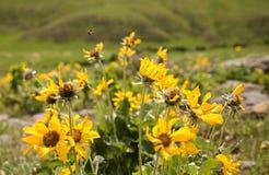 Flores amarillas en primavera Imagenes de archivo