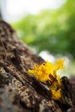 Flores amarillas en tronco de árbol Foto de archivo