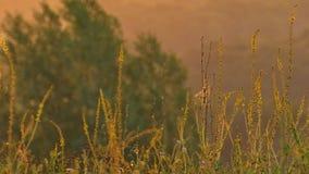 Flores amarillas en una colina sacudida por la brisa de la mañana metrajes