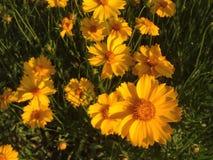 Flores amarillas felices fotografía de archivo