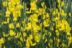 Flores amarillas hermosas foto de archivo