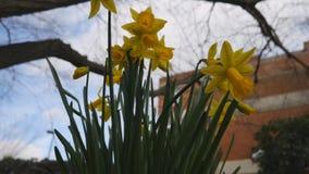 Flores amarillas hermosas metrajes