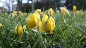 Flores amarillas hermosas almacen de metraje de vídeo