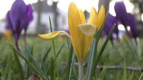 Flores amarillas hermosas almacen de video