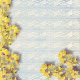 Flores amarillas hermosas del verano en fondo del cordón Fotos de archivo libres de regalías
