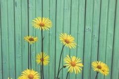 Flores amarillas hermosas en el fondo de madera azul Fotos de archivo libres de regalías