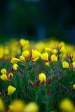 Flores amarillas hermosas en fondo verde Fotografía de archivo