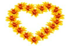 Flores amarillas hermosas en forma de corazón Imagen de archivo libre de regalías