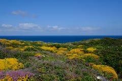 Flores amarillas hermosas en la costa de Algarve, Portugal fotografía de archivo
