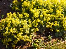 Flores amarillas hermosas plantadas en un parque Imagen de archivo
