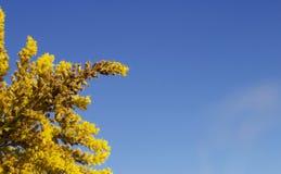 Flores amarillas inusuales foto de archivo