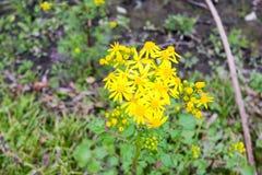Flores amarillas oscuras Imagen de archivo libre de regalías