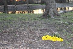 Flores amarillas por un lago Foto de archivo libre de regalías