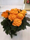 Flores amarillas prósperas y hojas verdes fotografía de archivo libre de regalías