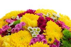 Flores amarillas, rojas y rosadas de la momia Imagenes de archivo