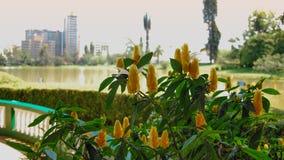 Flores amarillas sobre un lago Fotos de archivo libres de regalías