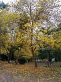 Flores amarillas Tailandia de la belleza Imagenes de archivo