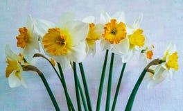 Flores amarillas y blancas Narcisos Fotos de archivo