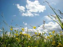 Flores amarillas y cielo azul imagenes de archivo