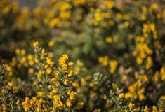 Flores amarillas y cielos azules - parques de Londres fotografía de archivo