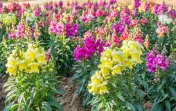 Flores amarillas y púrpuras Foto de archivo