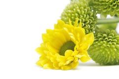 Flores amarillas y verdes Foto de archivo libre de regalías