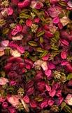 Flores & folhas secadas fotografia de stock royalty free