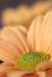 Flores anaranjadas Fotografía de archivo