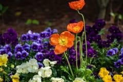 Flores anaranjadas con otras flores coloreadas en el fondo foto de archivo libre de regalías