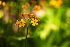 Flores anaranjadas contra fondo verde foto de archivo libre de regalías