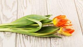 Flores anaranjadas del tulipán Foto de archivo