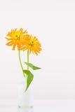 Flores anaranjadas del zinnia en florero Fotos de archivo