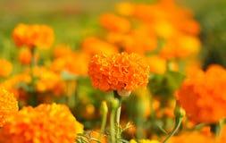 Flores anaranjadas en el cielo Foto de archivo