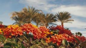 Flores anaranjadas en un fondo de palmeras almacen de video
