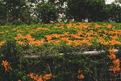 Flores anaranjadas en un top del tejado Imagenes de archivo