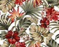 Flores anaranjadas rojas brillantes tropicales Imagen de archivo