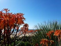 Flores anaranjadas sobre la playa y el océano Imagen de archivo libre de regalías