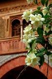 Flores anaranjados de Alhambra imágenes de archivo libres de regalías