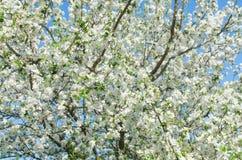 Flores animadores da flor no dia de mola fotos de stock royalty free