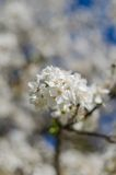 Flores animadores da flor no dia de mola fotografia de stock royalty free
