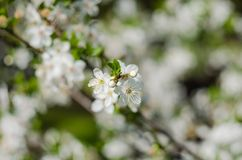 Flores animadores da flor no dia de mola fotos de stock