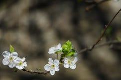 Flores animadores da flor no dia de mola imagem de stock