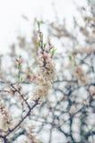 Flores animadores da flor no dia de mola Flores da beleza Imagem de Stock