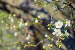 Flores animadores da flor no dia de mola Flores da beleza Fotos de Stock Royalty Free