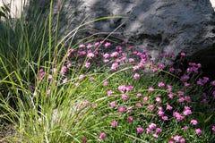 Flores antes de la roca Foto de archivo