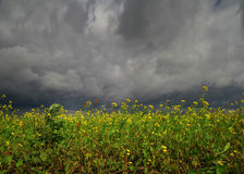 Flores antes do temporal Fotos de Stock