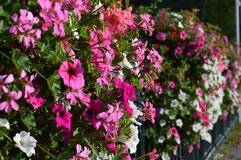 Flores ao longo da cerca foto de stock