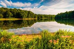 Flores ao longo da costa do lago Marburg no parque estadual de Codorus, P Imagens de Stock